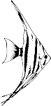 Angel Fish Decal 2