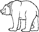 Bear Decal 4