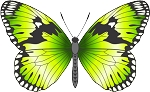 Colored Butterfly Decal 10