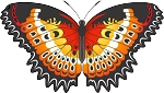 Colored Butterfly Decal 12