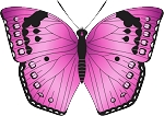 Colored Butterfly Decal 1