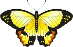 Colored Butterfly Decal 2
