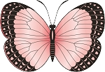 Colored Butterfly Decal 3