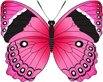 Colored Butterfly Decal 5