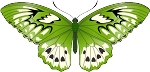 Colored Butterfly Decal 6