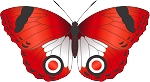 Colored Butterfly Decal 7