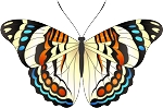 Colored Butterfly Decal 8