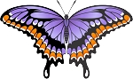 Colored Butterfly Decal 9
