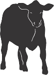 Cow Decal 12
