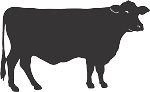 Cow Decal 17