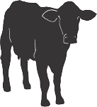 Cow Decal 18