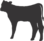 Cow Decal 19