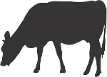 Cow Decal 1