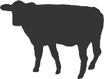 Cow Decal 22