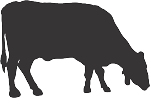 Cow Decal 24