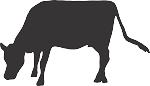 Cow Decal 3