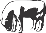 Cow Decal 4