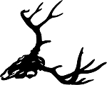 deer skull 2 decal