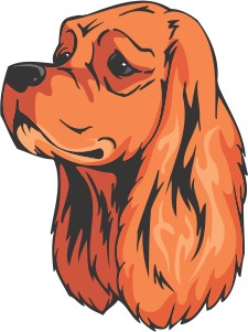 American Cocker Spaniel Decal