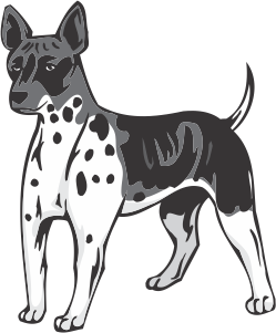 American Hairless Terrier Decal