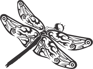 dragonfly 79 decal